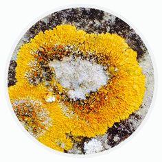Circle - Organic Matter - 416 - Random Series - Diane Manton - 3rd October 2014 On October 3rd, October 2014, Microscopic Images, Organic Matter