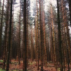 There's something so calming about the middle of pine forests