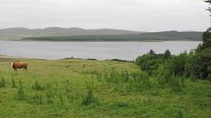 loch calder - Google Search North Coast 500, Brown Trout, Fly Fishing, Scotland, Country, Google Search, Travel, Trout, Voyage