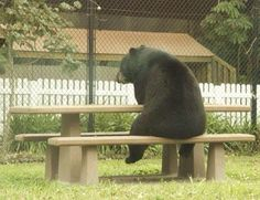 Funny pictures about Existentialist Bear. Oh, and cool pics about Existentialist Bear. Also, Existentialist Bear photos. Baby Animals, Funny Animals, Cute Animals, Talking Animals, Animal Fun, Sometimes I Wonder, Love Bear, Big Bear, Tier Fotos