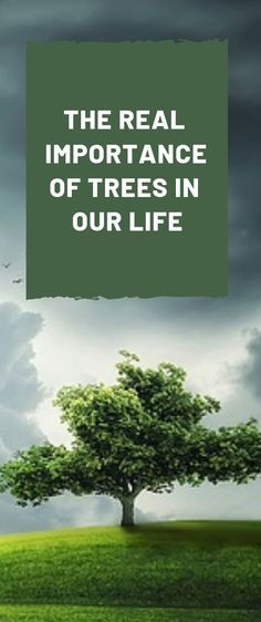 Before we get into the discussion of the real importance of trees in our life, let's have a brief look at what nature has given to us. Forest Pictures, Nature Pictures, Green Life, Go Green, Organic Gardening, Gardening Tips, Importance Of Trees, Environmental News, Picture Tree