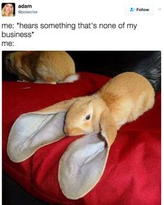 Funniest animal memes ever - 19 images - page 2 - cute animals giant bunny, Funny Animal Memes, Cute Funny Animals, Funny Animal Pictures, Cute Baby Animals, Funny Cute, Animals And Pets, Funny Memes, Funny Humour, Strange Animals