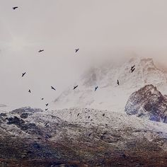 Papers.co wallpapers - mo75-winter-mountain-bird-rene-reichelt-dark-nature - http://papers.co/mo75-winter-mountain-bird-rene-reichelt-dark-nature/ - animal, mountain