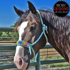 Teskey's One of a Kind Rope Halters with Bead Strips Horse Halters, Horse Bridle, Horse Gear, Horse Saddles, Pretty Horses, Beautiful Horses, Animals Beautiful, Western Horse Tack, Western Riding