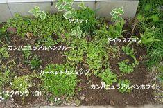 細長い花壇3