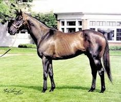 Miners Mark(1990)(Colt)Mr Prospector- Personnel Ensign By Private Account. Outcross In First 5 Generations. 18 Starts 6 Wins 4 Seconds 2 Thirds. $967,170. Won Jockey Club Gold Cup(G1), Jim Dandy S(G2), Colin S(Can-3), 2nd Dwyer S(G2), 3rd Travers S(G1), Jim Beam S(G2).