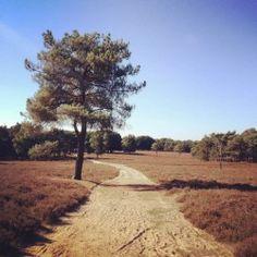 Wezepsche Heide nabij Wezep