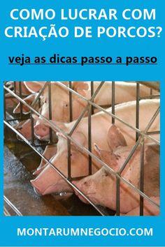 0e67853240 Criação de porcos  É lucrativo  Dicas para começar a criar