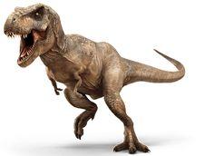 Exercício de Interpretação de Texto - Dinossauros  Leia o texto abaixo e faça o exercício que se segue. Tiranossauro-Rex e o Brasilotitan  O dinossauro conhecido como tiranossauro-rex viveu a cerca de entre 145 milhões de anos atrás. O tiranossauro-rex era carnívoro e muito feroz. O tiranossauro-rex tinha cerca de 5 metros de altura e podia chegar a 13 metros de comprimento e pesar entre 4 e 6 toneladas. Sua cauda podia chegar a 6 metros. Os maiores dentes do T-rex podiam chegar a medir 30…