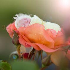 New fairy in my garden by hofhauser.deviantart.com on @DeviantArt