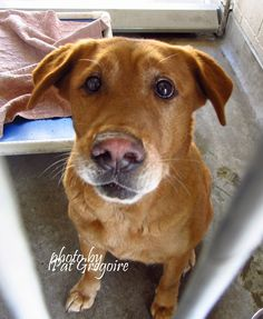 RIP SWEET BEAUTYwe failed you... 9/1/15 STILL THERE!! {{NO PUBLIC VIEW}} #A4869284 I am a friendly female gold Golden Retriever mix. I came to the shelter as a stray on August 21. available 8/31/15. quarantined. located in bldg 4 - no public view NOTE: high kill shelter dogs there are always urgent!! Baldwin Park shelter https://www.facebook.com/photo.php?fbid=1018249251520245&set=a.705235432821630&type=3&theater PLS HELP SHARE/SAVE THIS SWEET GIRL...HURRY!!