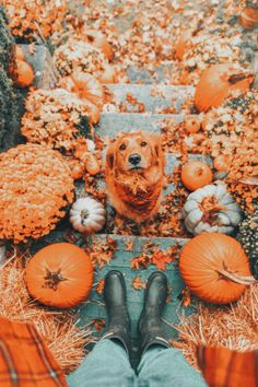 Cute Puppies, Cute Dogs, Photo Animaliere, Photo Shoot, Autumn Cozy, Autumn Feeling, Dark Autumn, Fall Winter, Fall Wallpaper