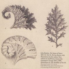 A detail of leaves used as models by the artisans in the stonework in Venice.
