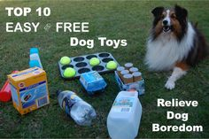 http://www.pavedbypawprints.com/top-10-easy-and-free-dog-toys-relieve-dog-boredom/  Top 10 Easy & Free Dog Toys - Relieve Dog Boredom