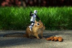 Using a few simple techniques Chris McVeigh was able to interact with some wild chipmunks in his parents backyard. In doing so, some very comical photographs were created with lego and Star Wars figures.