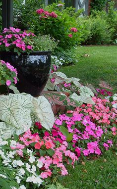 and Caladiums for the shade garden. - Impatiens and Caladiums for the shade garden. -Impatiens and Caladiums for the shade garden. - Impatiens and Caladiums for the shade garden. Design Jardin, Garden Design, Lawn And Garden, Garden Pots, Garden Shrubs, Spring Garden, Caladium Garden, Balcony Gardening, Fruit Garden