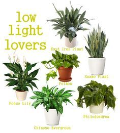 Original Pin: Low light loving houseplants -- perfect for a small apartment with little natural light!