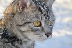 Cat and snow by KarolinaHabiel.deviantart.com on @deviantART