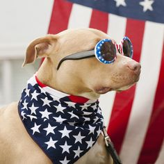 fourth-of-july-dogs-1.jpg (680×680)