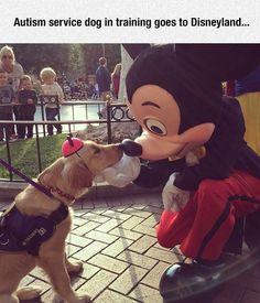 Autism Service Dog In Training At Disney
