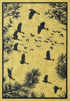 Yellow-tailed black cockatoos in flight 63 x 42 cm Edition of 50 $900 Hand coloured linocut on handmade Japaese paper
