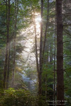 Forest light by Charlotte Gibb on 500px
