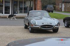 The dog has good taste. #jaguar #etype #classicjaguar #jaguaretype #supercar #sportscar #car #beautiful #forsale #carforsale #jaguarforsale #classiccarforsale #classic #cars #classsiccar #drivetastefully #petrolicious #series1 #series2 #series3 #V12 #british #britishindustry #carsofinstagram #exotic #luxury #exoticcar #exoticcars #coolcars