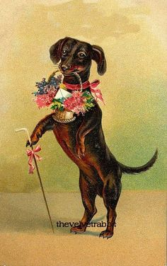 DACHSHUND DOG HOLDING BOUQUET OF FLOWERS TWO 5 by THEVELVETRABBIT, $14.00