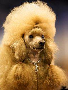 20 Dogs With Better Hairstyles Than You http://www.ivillage.com/dog-hairstyles-better-than-you/7-a-544390