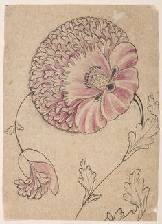 Drawing of a flower and bud , India, 18th - 19th century