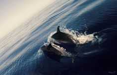 The ocean is were i belong..