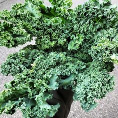 Kale Fact: Did you know that kale has more iron than beef per calorie? https://instagram.com/the2.0life/