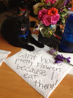 The best of cat shaming - Part 5 (compilation - click for more!)