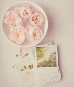 roses and polaroids