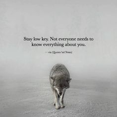 Positive Quotes : Stay low key..
