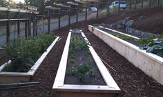Raised beds on a slope - eclectic - landscape - other metro - David Edrington, Architect,   tiered garden beds