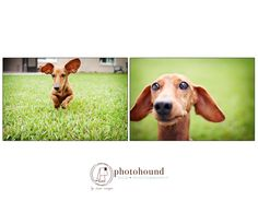 Photohound dog photography