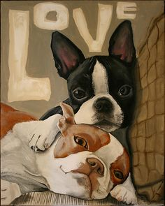 boston terriers                                                                                                                                                                                 More