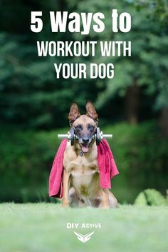 Dogs are great companions, even for a workout! How to here: via @DIYActiveHQ #pets #dogs #dogworkout