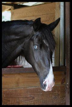 Love the eyes! Beautiful horse...