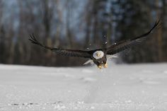 Le chasseur. by Denis Dumoulin on 500px