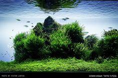 SUMIDA AQUARIUM - RELOADED | Flickr - Photo Sharing!