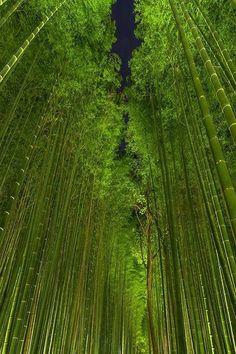 Beautiful Bamboo Forest by night, Arashiyama, Kyoto, Japan