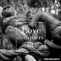 Love conquers all. #love #animals #blackandwhite #quotes #gorillas #madewithstudio