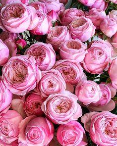fleur aesthetic Shabby Flowers, Love Flowers, Peonies, Ranunculus, Pink Aesthetic, Peace And Love, Pretty In Pink, Flower Power, Like4like