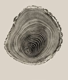 """""""a meditation on time through the inked cross-sections of fallen trees"""""""