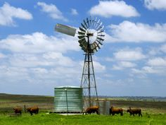 Watering Cattle Beneath Windmill on Darling Downs, Southern Queensland Landscapes Photographic Print - 61 x 46 cm Windmill Tattoo, Windmill Drawing, Farm Windmill, Windmill Wall Decor, Windmill Decor, Dutch Windmill, Old Windmills, Old Country Churches, Le Moulin