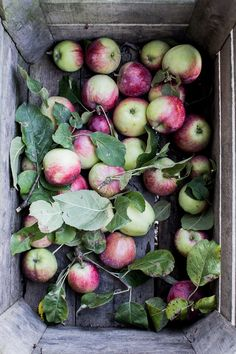 Apple Cinnamon Rolls + A few Apple Picking Photos — Flourishing Foodie Apple Cinnamon Rolls, Cinnamon Apples, Fruit Clipart, Edible Garden, Eco Garden, Food Photography Styling, Food Styling, Cooked Apples, Pureed Food Recipes