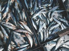 ¿Qué es mejor el pescado azul o el blanco?
