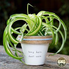 Treffen Sie Olivia McCallum von Plant Puns in Succulent Puns, Indoor Succulent Planter, Indoor Planters, Plants Indoor, Planting Succulents, Potted Plants, Planting Flowers, Potted Garden, Painted Plant Pots